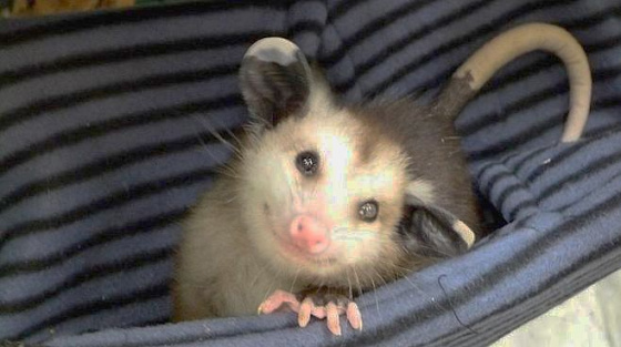Blind Possum.jpg