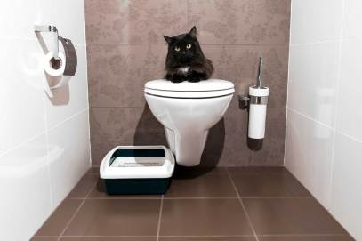 04-train-cat-use-a-toilet