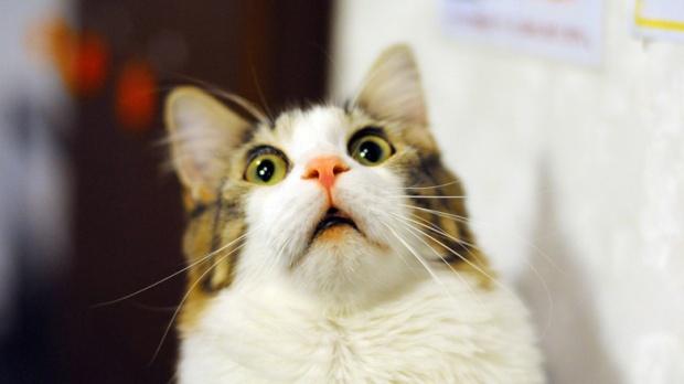scared-surprised-cat-face