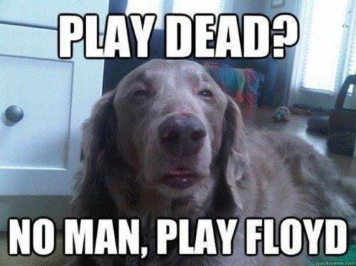 Play Dead No Play Floyd