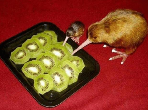Kiwi Cannibals