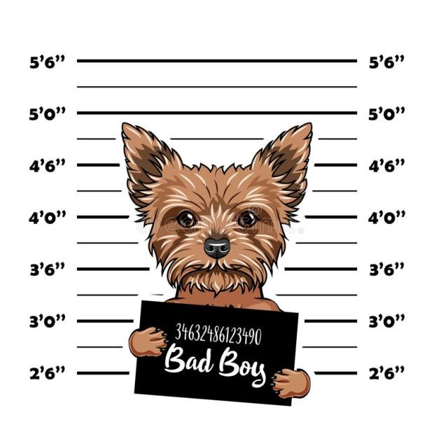 Bad Dog Mugshot