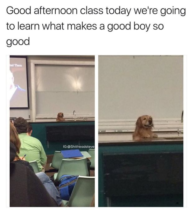 Good Afternoon Class Good Boy